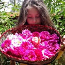 Love Thyself Organic Botanical Facial Care Pack | Cleanse ~ Exfoliate ~ Mask