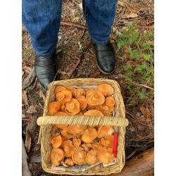 Autumn Mushroom Foraging Tours