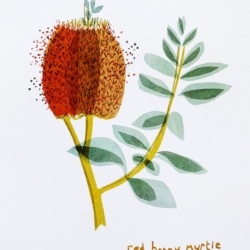 Honey Myrtle artwork