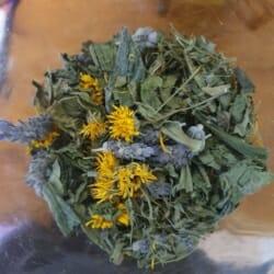 Balm ~ Herbal Salve