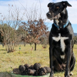 Winter Truffle Hunts with Lunch