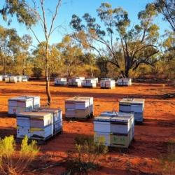 500g easy-squeeze 100% Australian raw honey