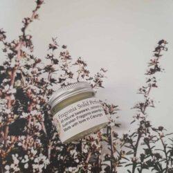 Fragonia solid perfume