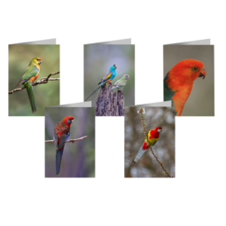 5 x Parrot Cards (Assorted)