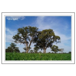 Blue Sky Photo Greeting Card