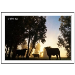 Cattle Silhouette Photo Greeting Card