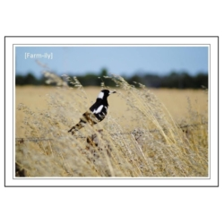 Magpie Photo Greeting Card