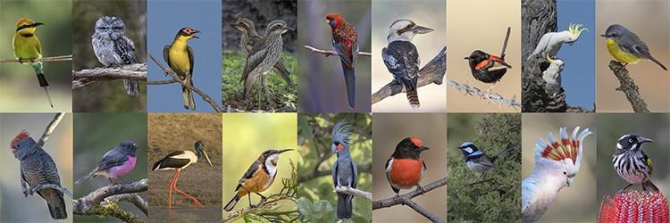Birds in Focus