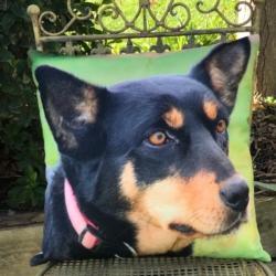 Cushion. Kelpie 2 (complete)