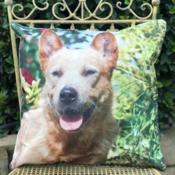 Cushion. Red cattle dog 1