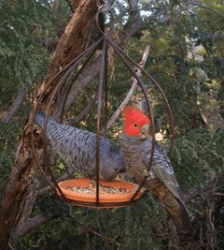 """Canberra"" metal bird feeder"