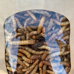 Freeze dried Insect Mix
