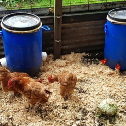 Ultimate Pack – Chicken Feeder and Waterer -DELIVERED!