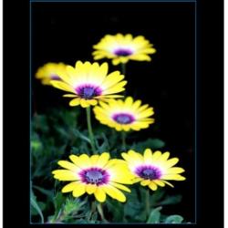 2021 A3 Flower Poster Calendar