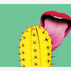 Tongue licking a yellow cacti greeting card. Ow! Humerous
