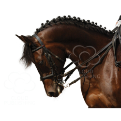 Dressage horse greeting card from Cloud Publishing