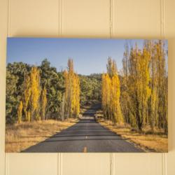 Photographic Wood Print – Into the Poplars