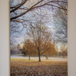 Photographic Wood Print – Golden Leaves