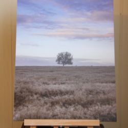 Photographic Wood Print – Lone Tree & Clouds