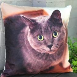 Cushion. Tinker cat