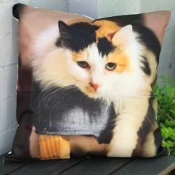 Cushion. Helen cat