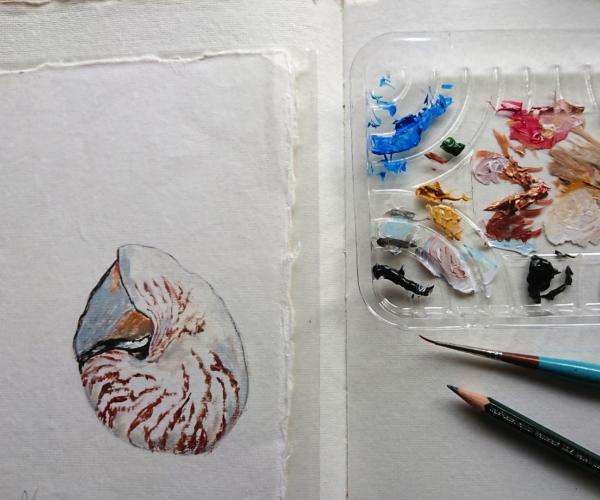 nautilus painting on paper