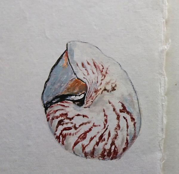 nautilus on paper close up