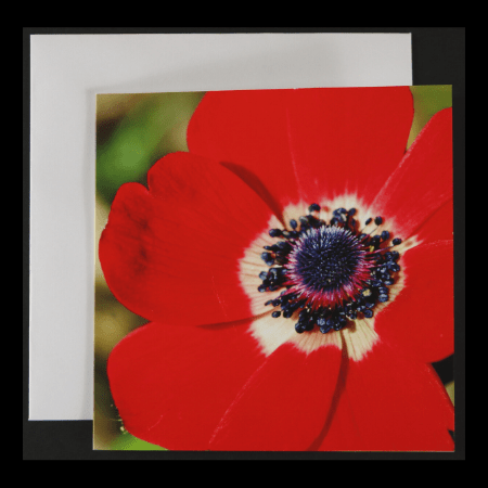 Square Greeting Card with Red Flower