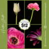 The Black Edition - Pack of 4 Flower Greeting Cards
