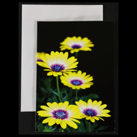 Greeting card with blue eyed yellow osteospermums