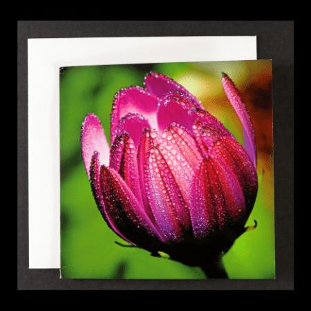 Square Card with Purple Osteospermum