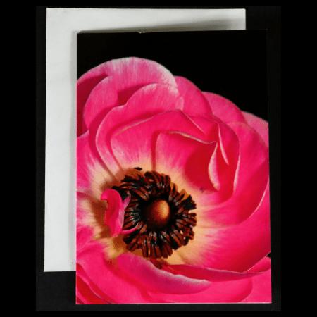 Greeting Card with Pink Ranunculus close up