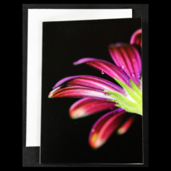 Flower Greeting Cards – Pack of 4 – The Black Edition