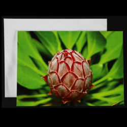 Flower Greeting Card – King Protea