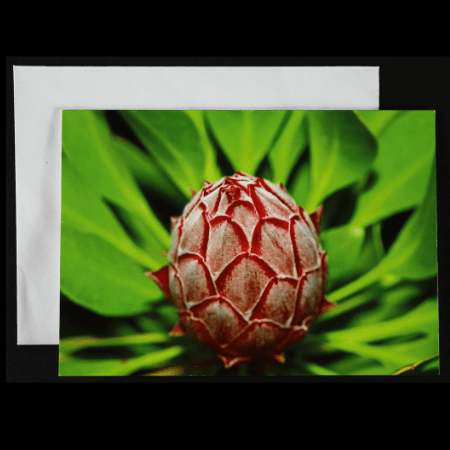 Greeting card with King Protea