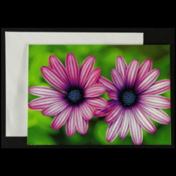 Flower Greeting Cards – Pack of 4 – 'Besties' Edition
