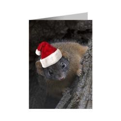 Christmas Card – Antechinus