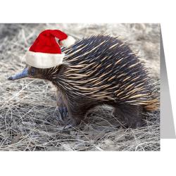 Christmas Card – Echidna