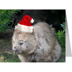 Christmas Card – Wombat