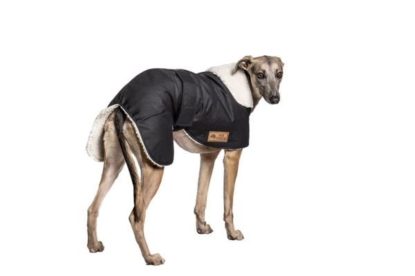Waterpoof Whippet Coat
