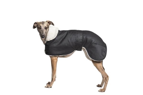 Waterproof Whippet Coat
