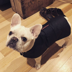 Waterproof Dog Coat – Regular Design