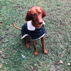 Waterproof Dog Coat – Collar Design