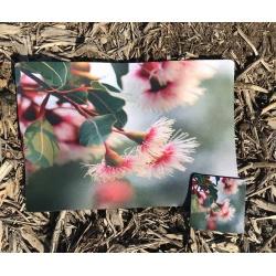 Gum Blossom 1 Placemat & Coaster Set