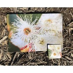White Blossom Placemat & Coaster Set