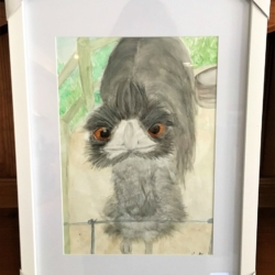 'Curious Emu' Original Signed Watercolour Painting A4 in A3 Frame – Free Shipping