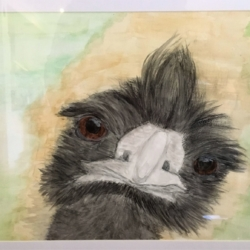 'Emu Selfie' Original Signed A4 in A3 Frame, Watercolour Painting – Free Shipping