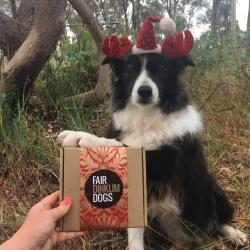 Doggy Christmas Treat Box