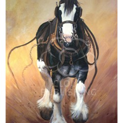 Running Clydesdale horse greeting card