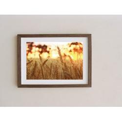 A3 Fine Art Wheat Photography Print, Unframed